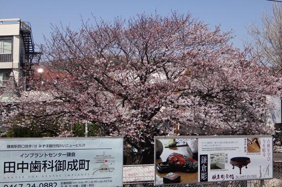 20120409_kamakura_009.jpg